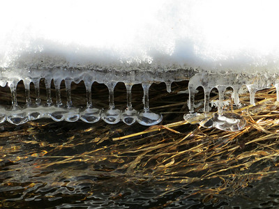 """""""Nature's Drink Glasses"""" - Daily Photo - 04/17/13  One good thing about not catching any fish is the time to look for photo opportunities.  I thought this was an interesting formation.  As the water dropped, these odd icicles were formed that to me appear like drink glasses hanging above a bar.  This is the last Michigan picture, a few remaining with snow and then I'm officially in Spring mode."""