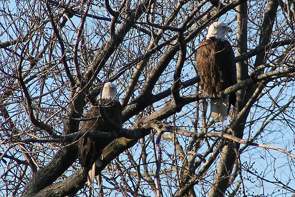 Winter and Bald Eagles on the Fox River - January and February 2013