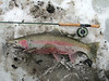 Pere Marquette River - Baldwin, Michigan - March 10 -15, 2013 :